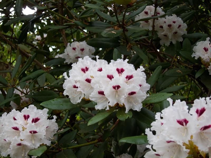 1576 Crystal Springs Rhododendron Garden
