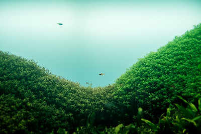 Forests Underwater by Takashi Amano at Lisbon Oceanarium