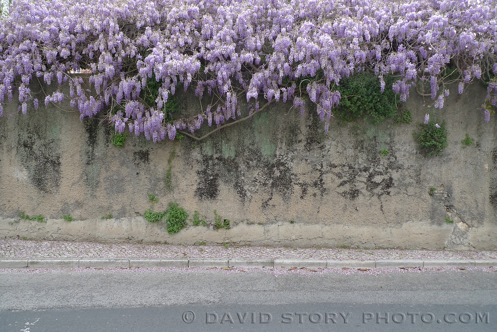 Floral wall. Lisbon, Portugal.