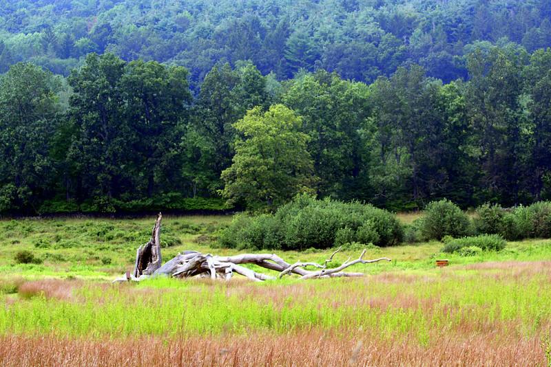 Fallen Tree - Ward Pound Ridge