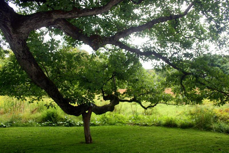 Part of The Bedford Oak