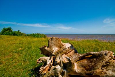 Driftwood and reddish ocean