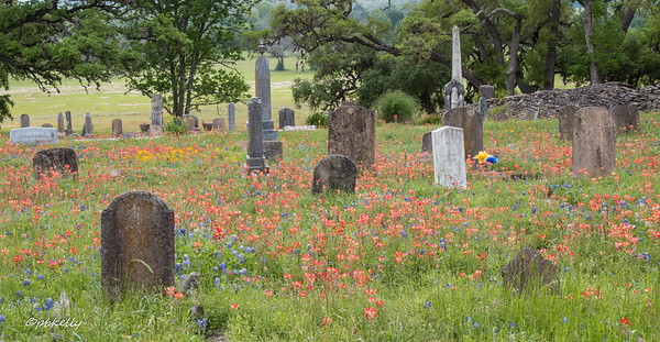 """""""God keeps the wild flowers blooming on mom and papa's grave.""""  We had stopped at several old churchyard to find one where the wildflowers were blooming.  This one in Fayette County had tombstones from the mid 1800's,   many of which were in German."""