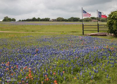 Texans seem to put Texas flags and symbols everywhere.