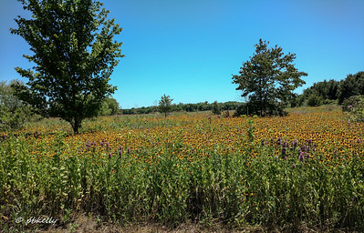 Another section  of wildflowers by the wetland.  You can see why I stood there with my jaw dropping.