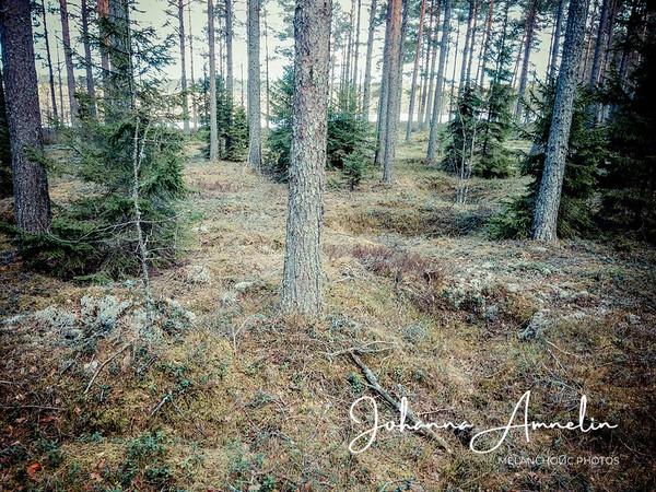 Punassuo, ryssänuuni ja puun halkaisema siirtolohkare