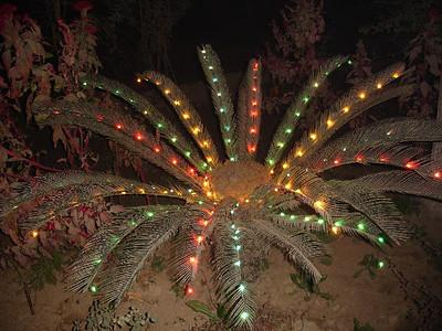 Plants decorated with lights in Bahishti Maqbara
