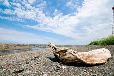 Lonely driftwood
