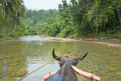 Jungle Ox Cart Ride