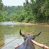 Jungle Ox Cart Ride