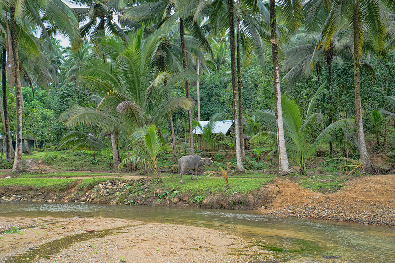 Jungle Homesite