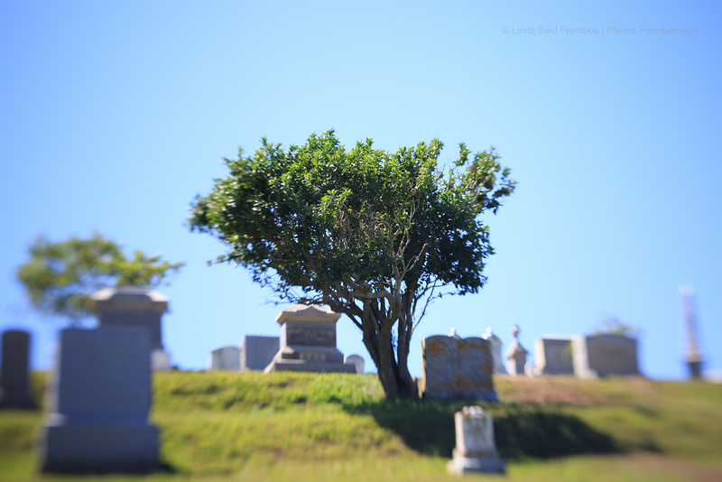 First try with the Lensbaby Spark: A tree in Island Cemetery on Block Island.
