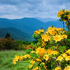 Mountains and Yellow, Roan 108