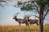 Elk Hunt-350