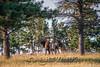 Elk Hunt-304