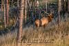 Elk Hunt-277