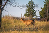 Elk Hunt-348