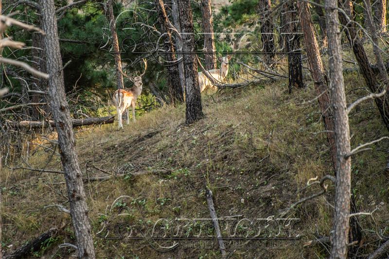 Elk Hunt-281