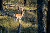 Elk Hunt-291