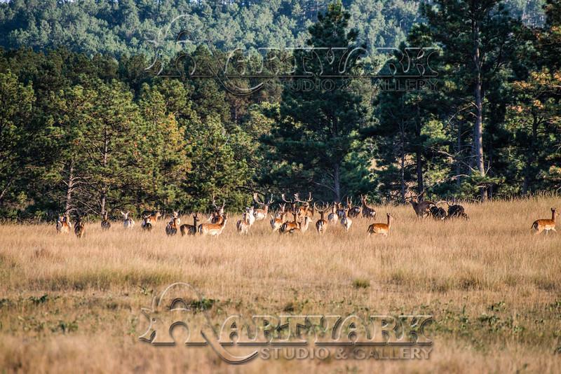 Elk Hunt-298