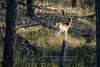 Elk Hunt-292