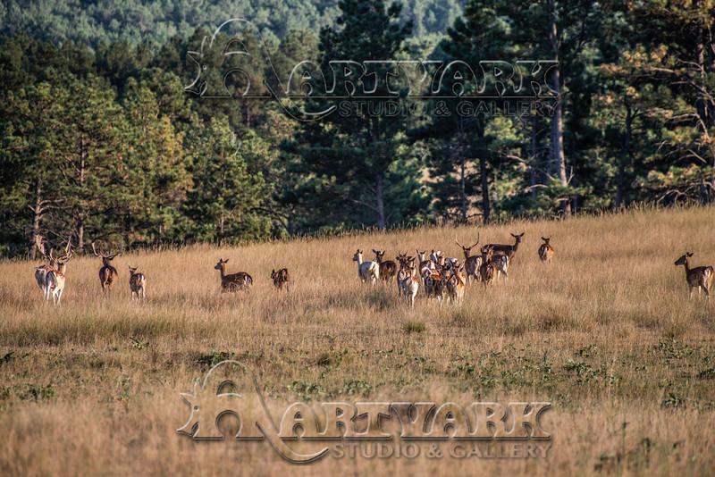 Elk Hunt-294