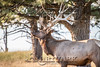 Elk Hunt-333