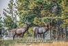 Elk Hunt-309