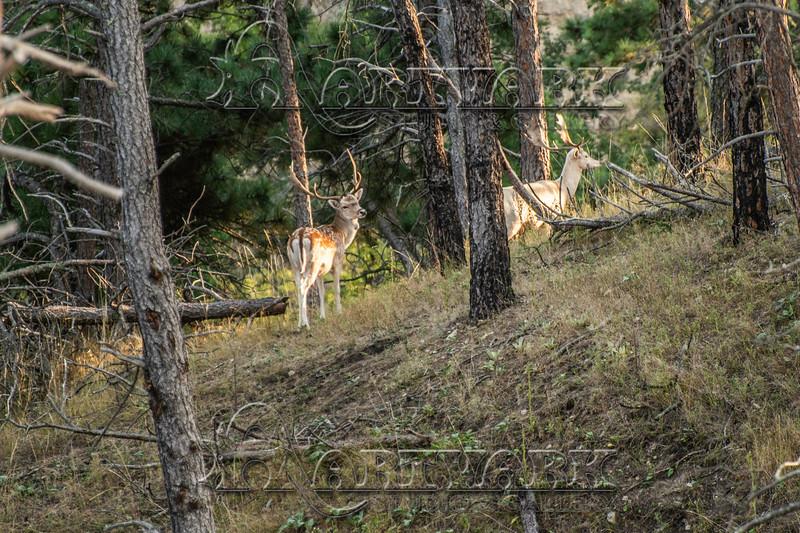 Elk Hunt-280