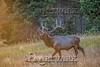 Elk Hunt-364