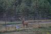 Elk Hunt-188