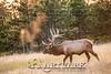 Elk Hunt-363