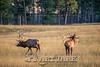 Elk Hunt-367