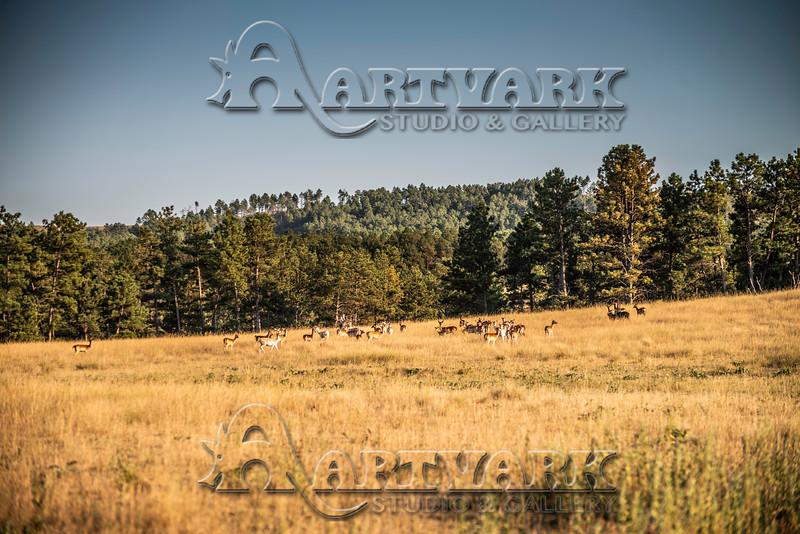 Elk Hunt-296
