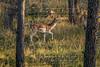 Elk Hunt-289