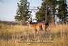 Elk Hunt-347