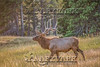 Elk Hunt-366