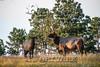 Elk Hunt-325