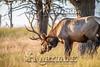 Elk Hunt-335