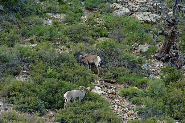 Rocky Mountain National 2007