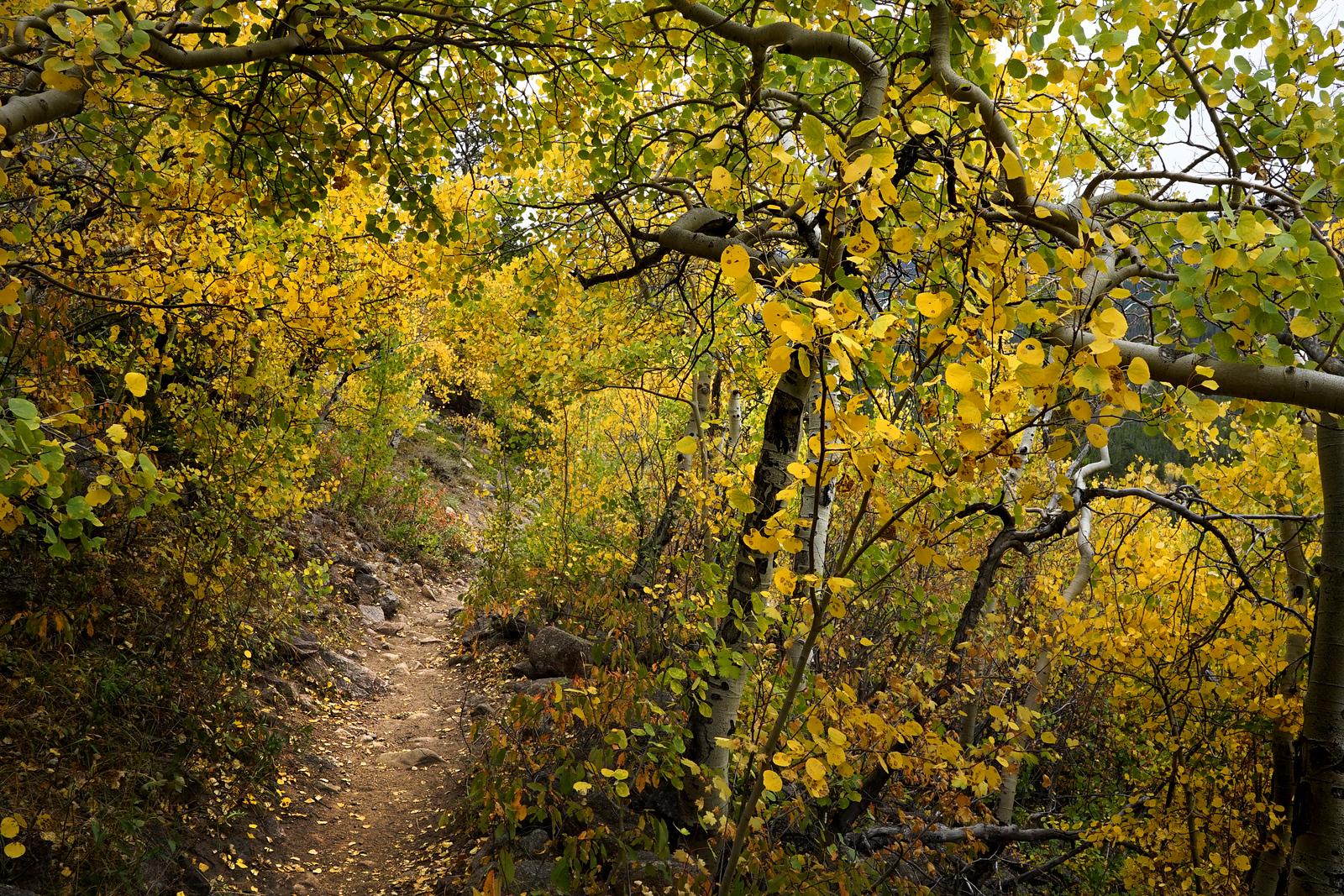 Hiking Path, Rocky Mountain