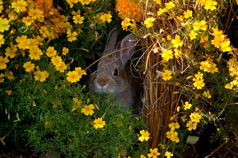 Stanley Hotel Rabbit