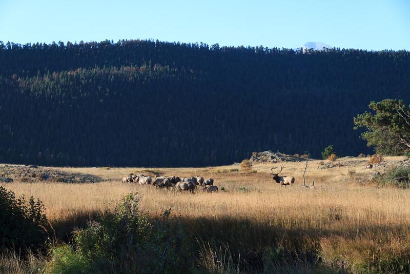2010 09 21 Estes Park RMNP 301