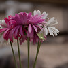Cemetry flowers