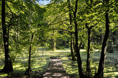 "Durch den Wald zum Königstuhl / Through the forest to ""Kings Chair"""