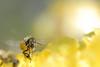 Bee 'art'
