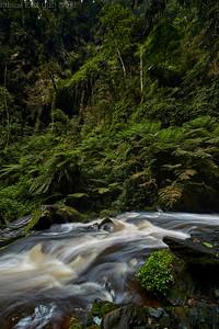 Nyungwe waterfall