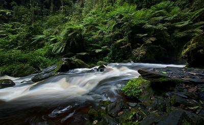 Nyungwe forest stream