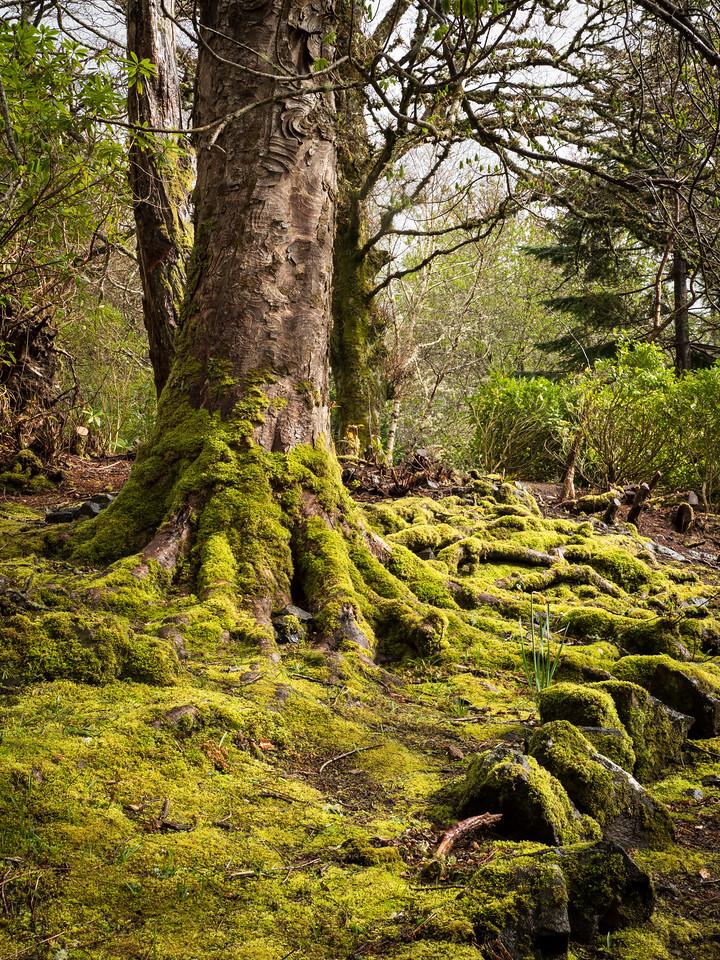 Dunvegan Castle Gardens, Isle of Skye