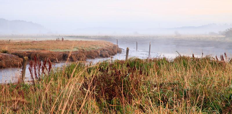 Fog in the Naselle